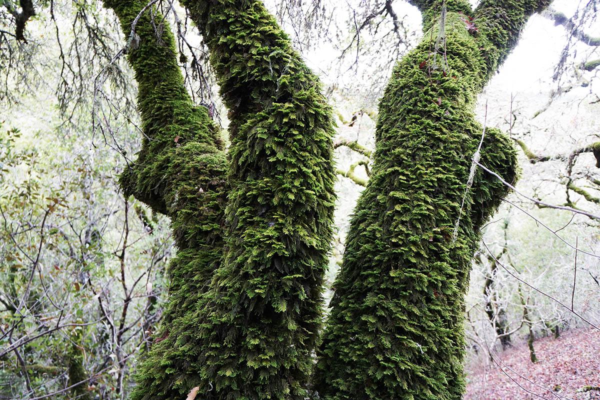 Sculpture of Relationship - CHAR Warnecke Ranch CA - copyright 2015 Marie S.A. Sorensen - 2015-12-22 - DSC02982a*